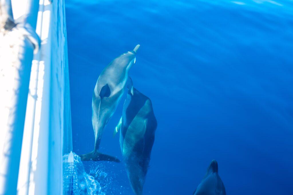 Moncada Yachts Wild Life