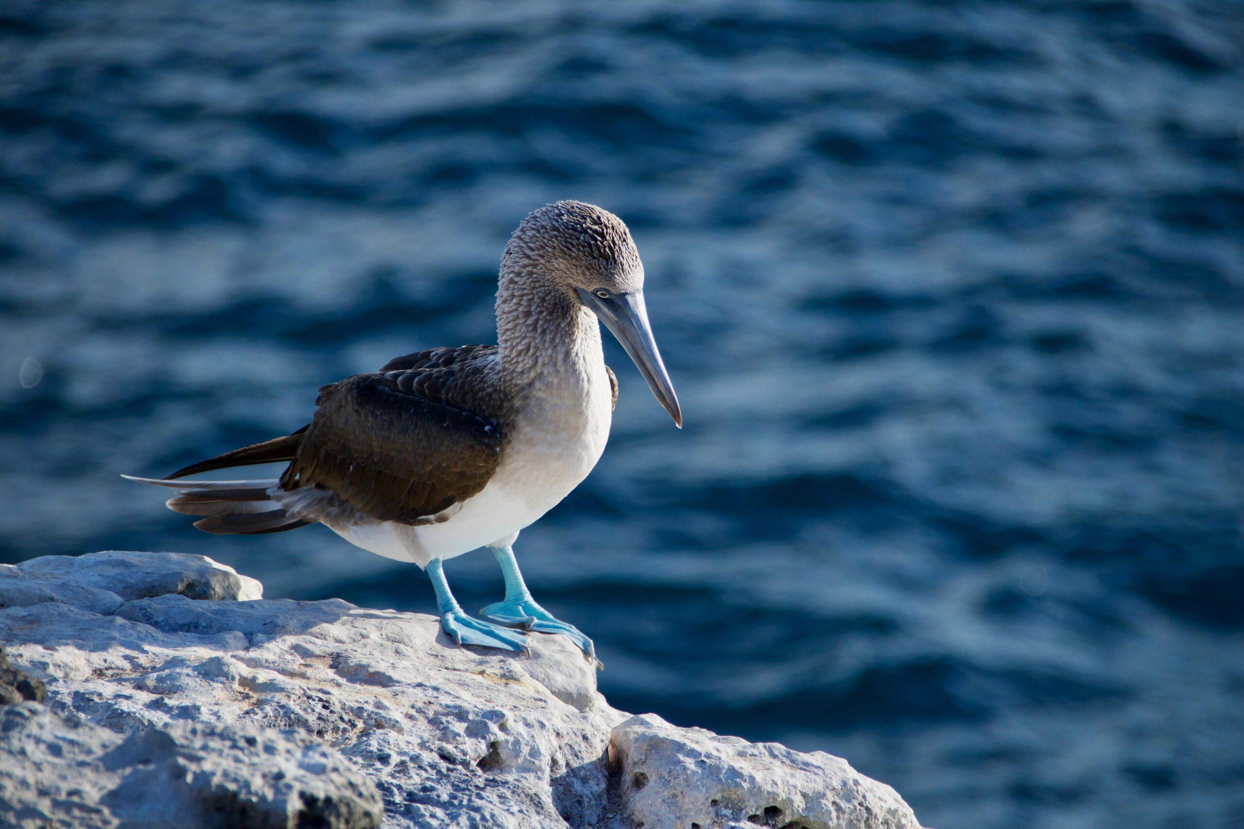 Moncada Yachts Wild Life Wild Life in the Galapagos Island